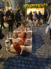 Weihnachtsmarkt Rapperswil_3
